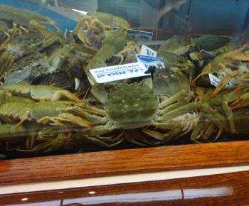 Granchio Cinese / Eriocheris sinensis e Gambero di fiume Turco / Astacus leptodactylus