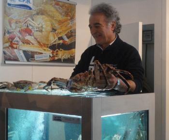 Golden Crab e King Crab
